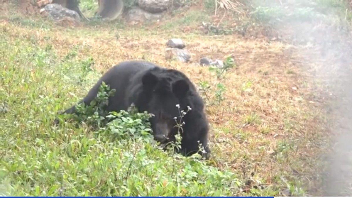 Сейчас медведица чувствует себя хорошо / скриншот
