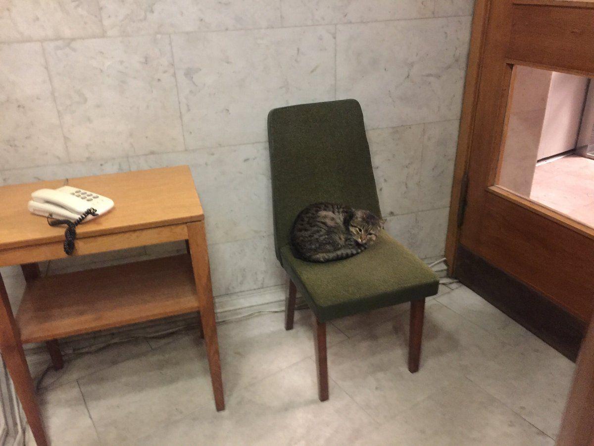 Кота назвали Амбассадор / twitter.com/Makeiev