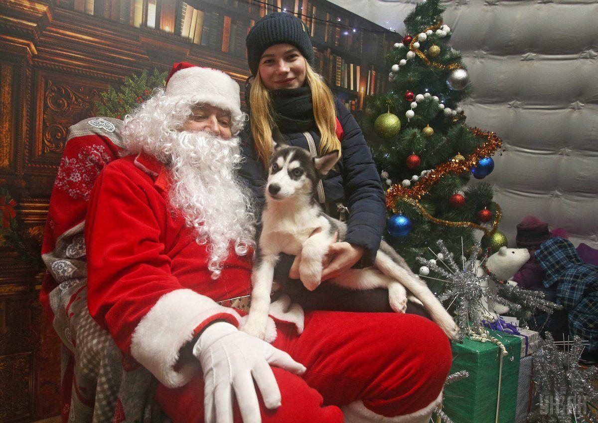 2018-ый год по восточному календарю - это год Собаки / фото УНИАН
