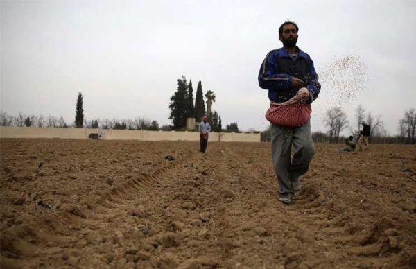 Мусульмане Сирии молятся об окончании засухи / islam-today.ru