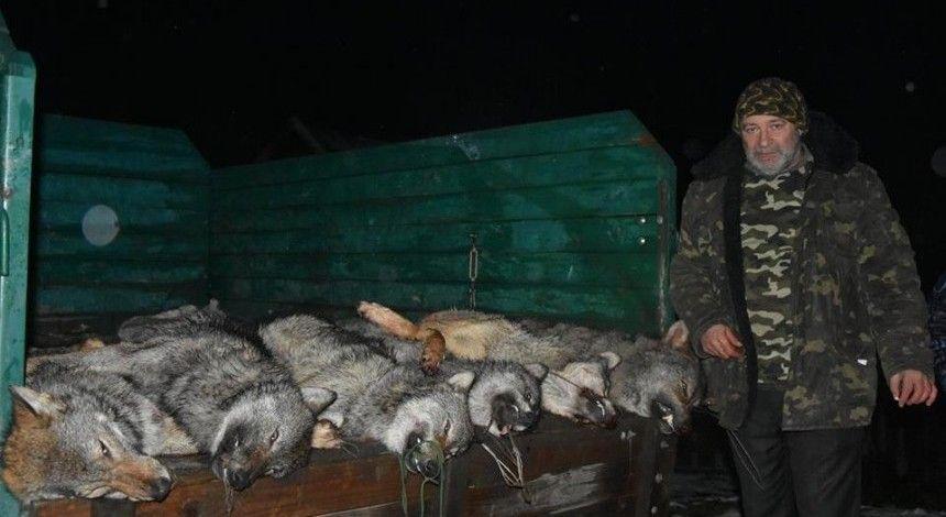 Мисливці знову хизуються вбивством тварин: на Закарпатті вполювали 6 вовків (фото)