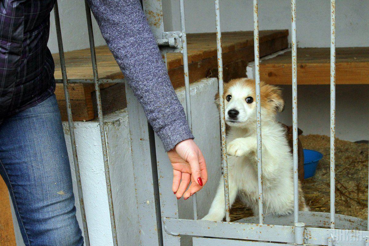 У Львові працює Центр всиновлення тварин / фото УНІАН