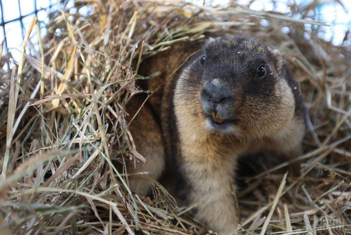 В Николаевском зоопарке из-за аномально теплой зимы сурки вышли из спячки / фото УНИАН