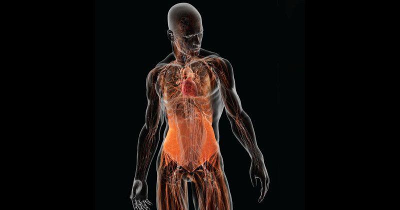 Тело человека содержит в себе около 125 тысяч килокалорий / фото fishki.net