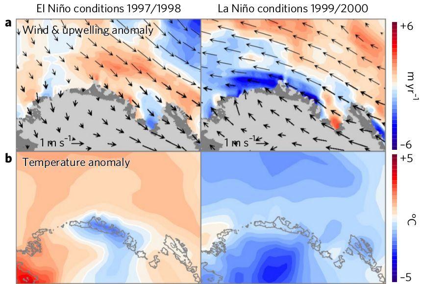 Карта ветровых и температурных аномалий на побережье моря Амундсена в течение Эль-Ниньо (слева) и Ла-Ниньи (справа) / фото F. S. Paolo et al./ Nature Geoscience