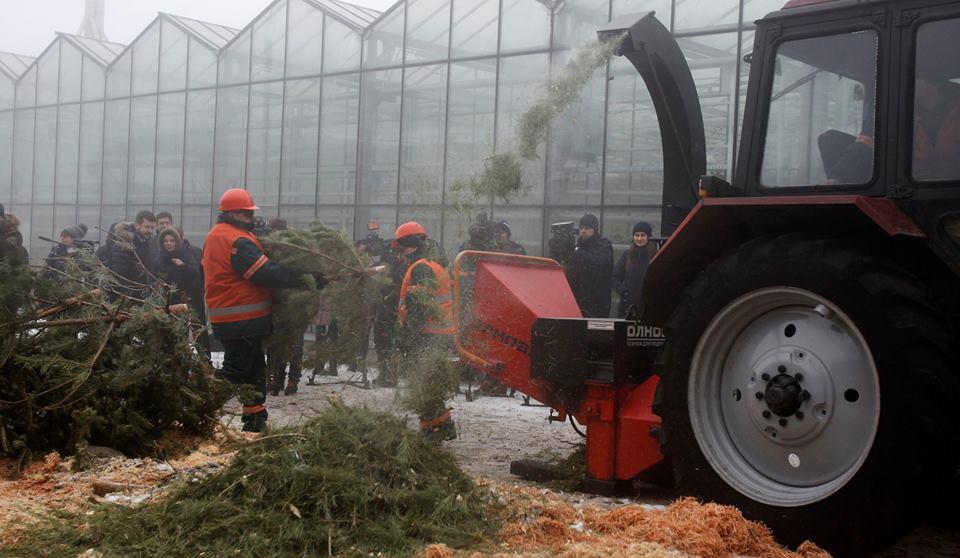 Елки переработают и весной используют для защиты почвы от пересыхания и перегрева лунок кустов и деревьев / фото Facebook КО