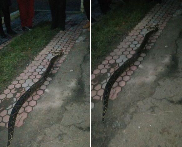 Плазуна виявили вбитим / фото facebook.com/yuriy.tarkaniy