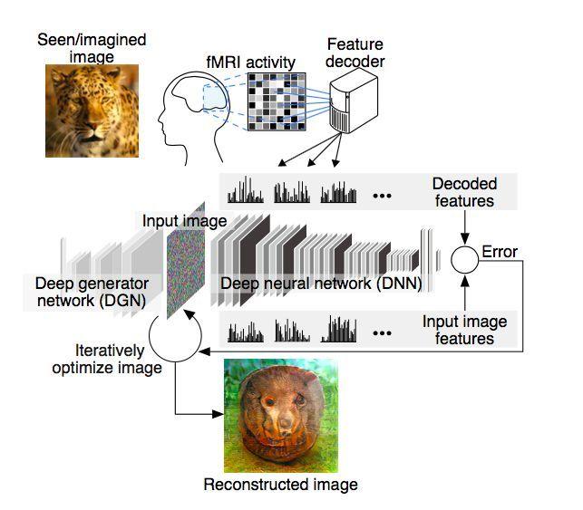 Алгоритм роботи нейромережі / фото Kamitani et al./bioRxiv.org