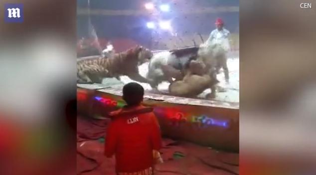 В китайском цирке лев и тигр набросились на лошадь / кадр из видео Daily Mail