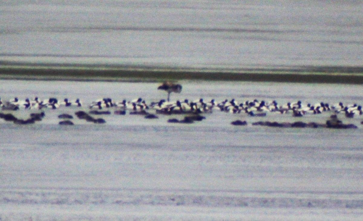 Фламинго заметили в Одесской области / фото facebook.com/minpryrody