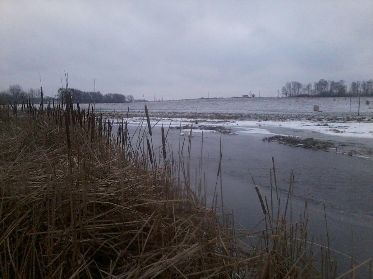 Птахів звільнили, однак чи таки полетіли вони на зимівлю невідомо / zt-lis.gov.ua