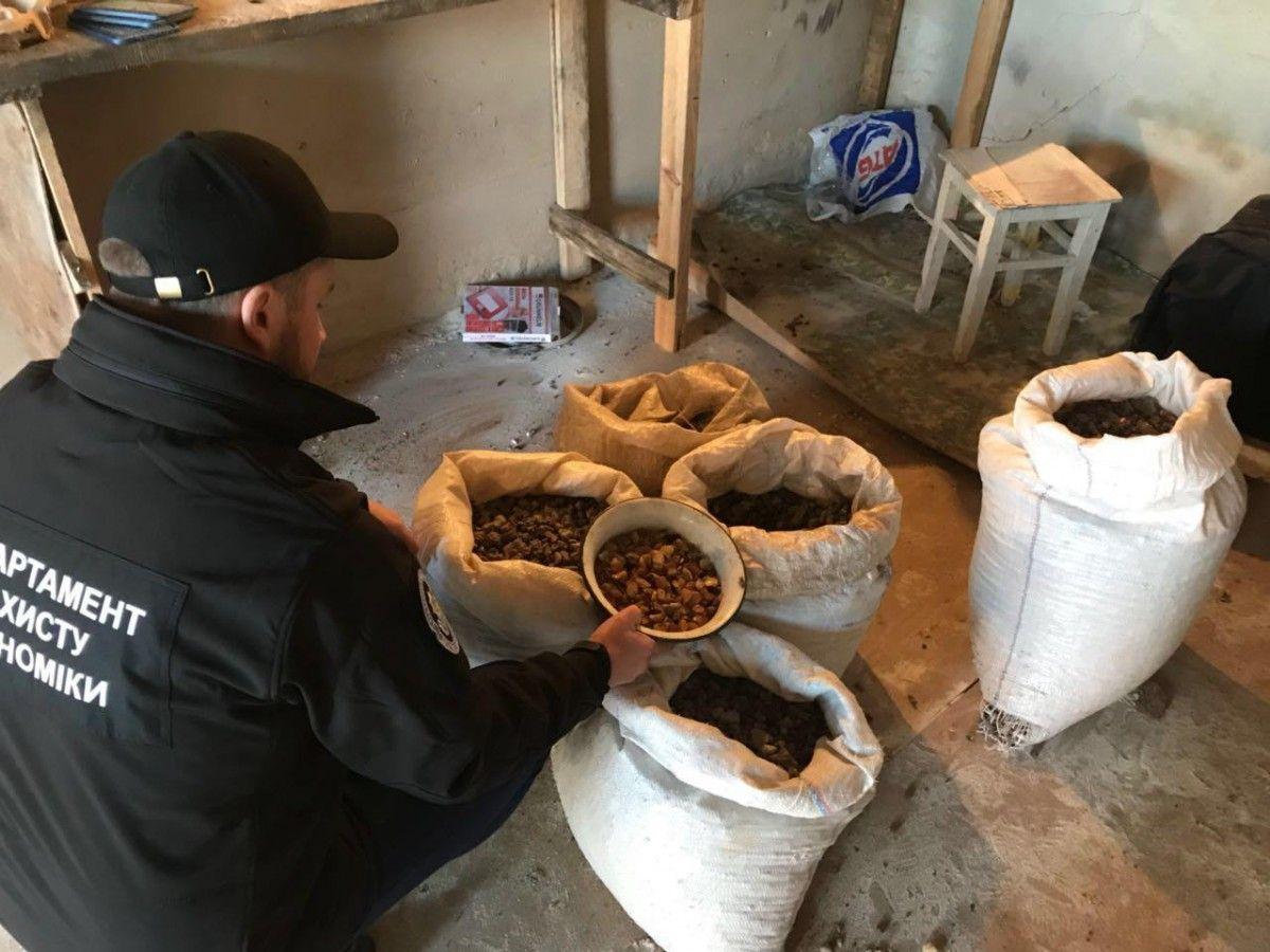 В ходе обыска обнаружено и изъято более 100 кг янтаря / фото zhit.gp.gov.ua