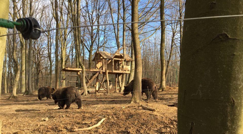 В Галицком национальном природном парке установили веб-камеру для наблюдения за медведями / фото report.if.ua