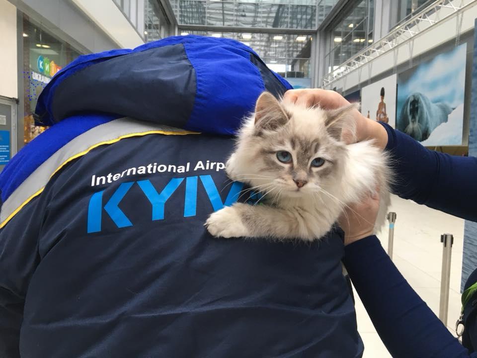 Молодую кошку хозяйка бросила прямо в аэропорту
