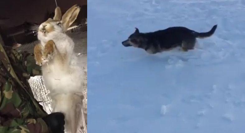 Животные замерзли / Скриншот