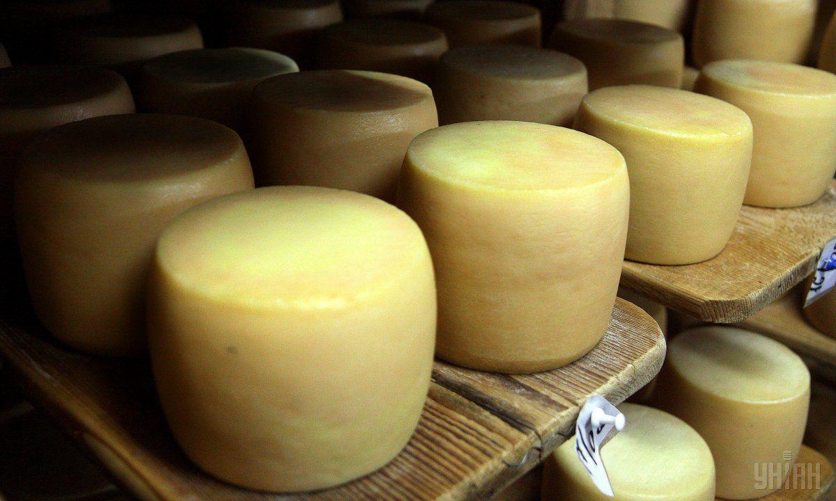 Импорт сыра в денежном выражении вырос на 31% / фото УНИАН