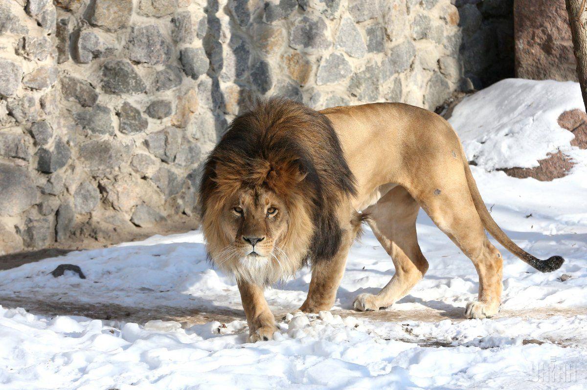 Ученые предположили, что древнейшие животные спаривались со всеми представителями своего вида \ УНИАН