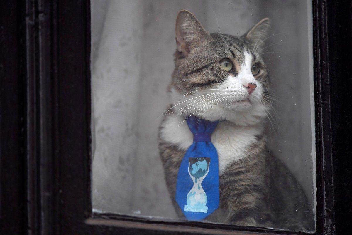 Кошка в окне посольства Эквадора в Лондоне, где живет опальный основатель Wikileaks Джулиан Ассанж, 26 января / Toby Melville / REUTERS