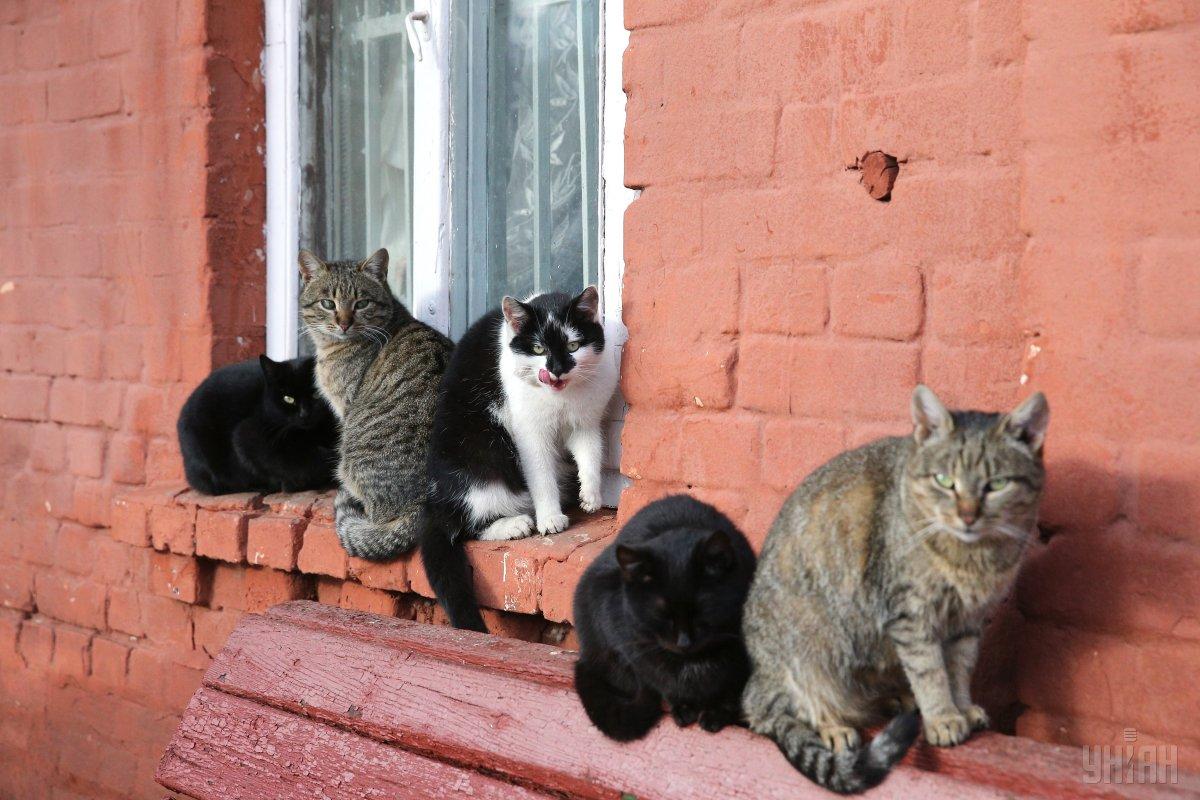 У Дніпрі котам тепер дозволяють більше / фото УНІАН