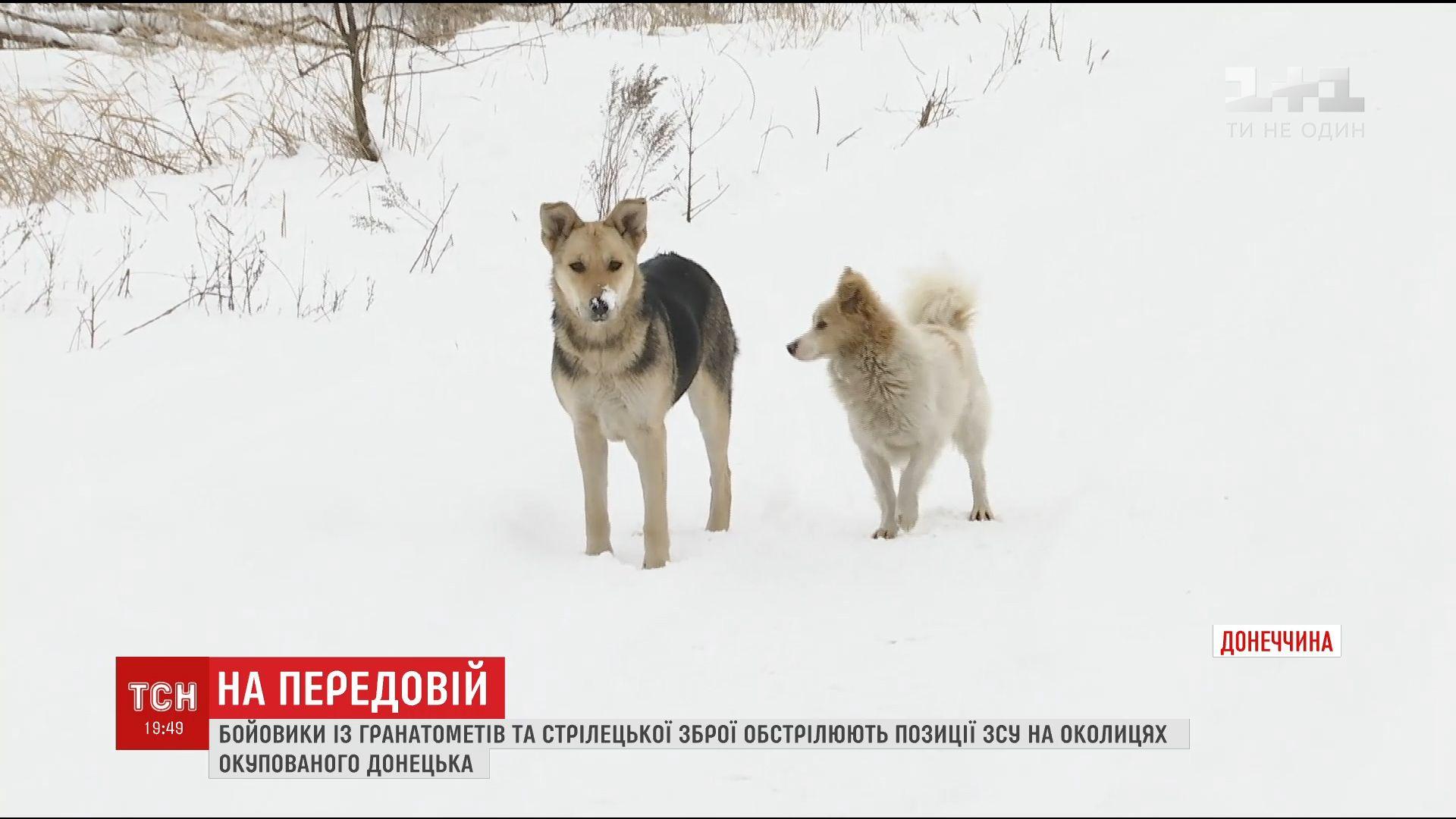 Боевики используют собак и кошек для отвлечения внимания украинских бойцов /