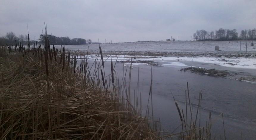 Самка вже примерзла до криги, а самець плавав поряд: під Житомиром врятували пару лебедів, які гинули на льоду (фото)