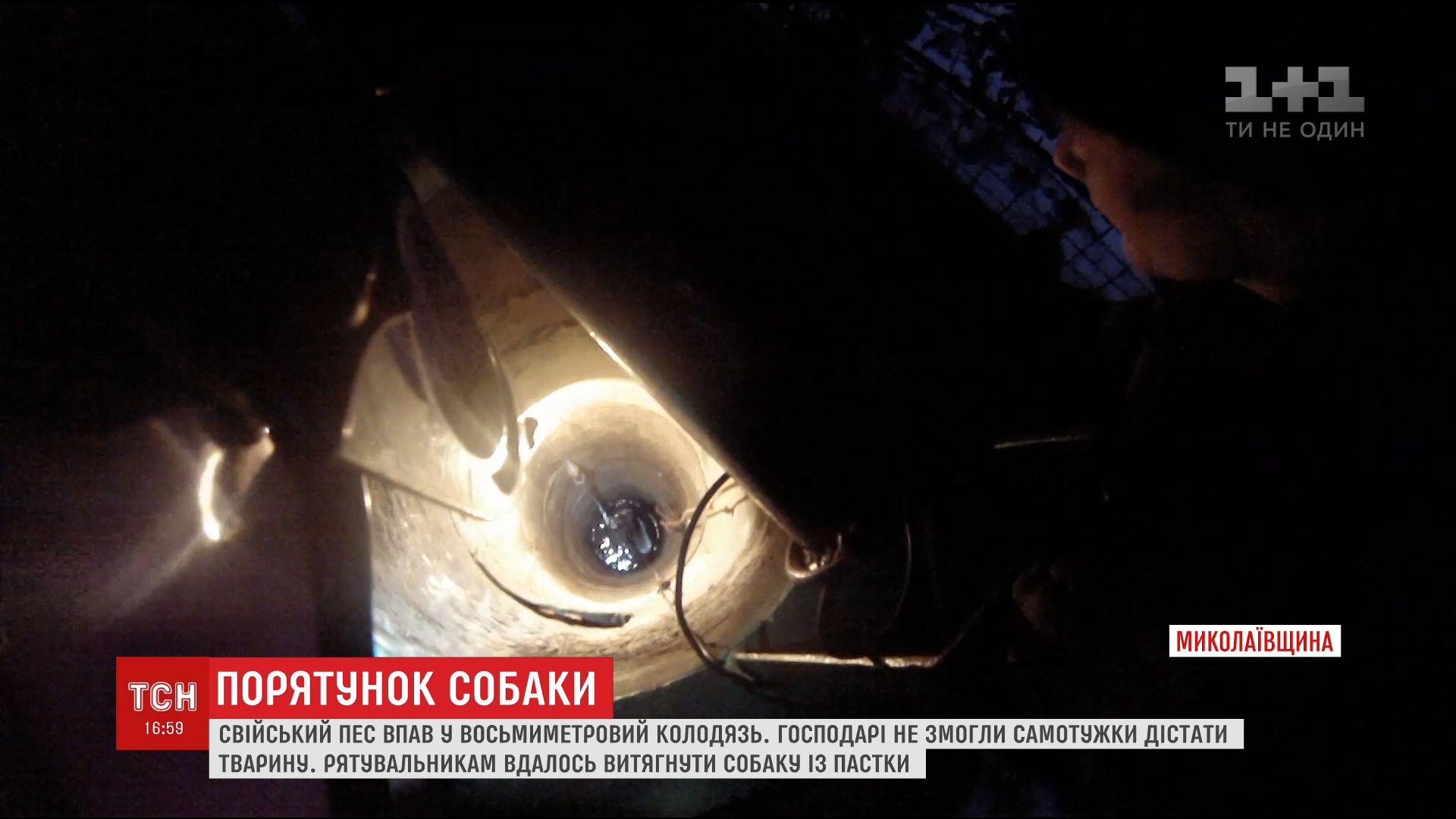На Николаевщине собака упала в 8-метровый колодец с водой /
