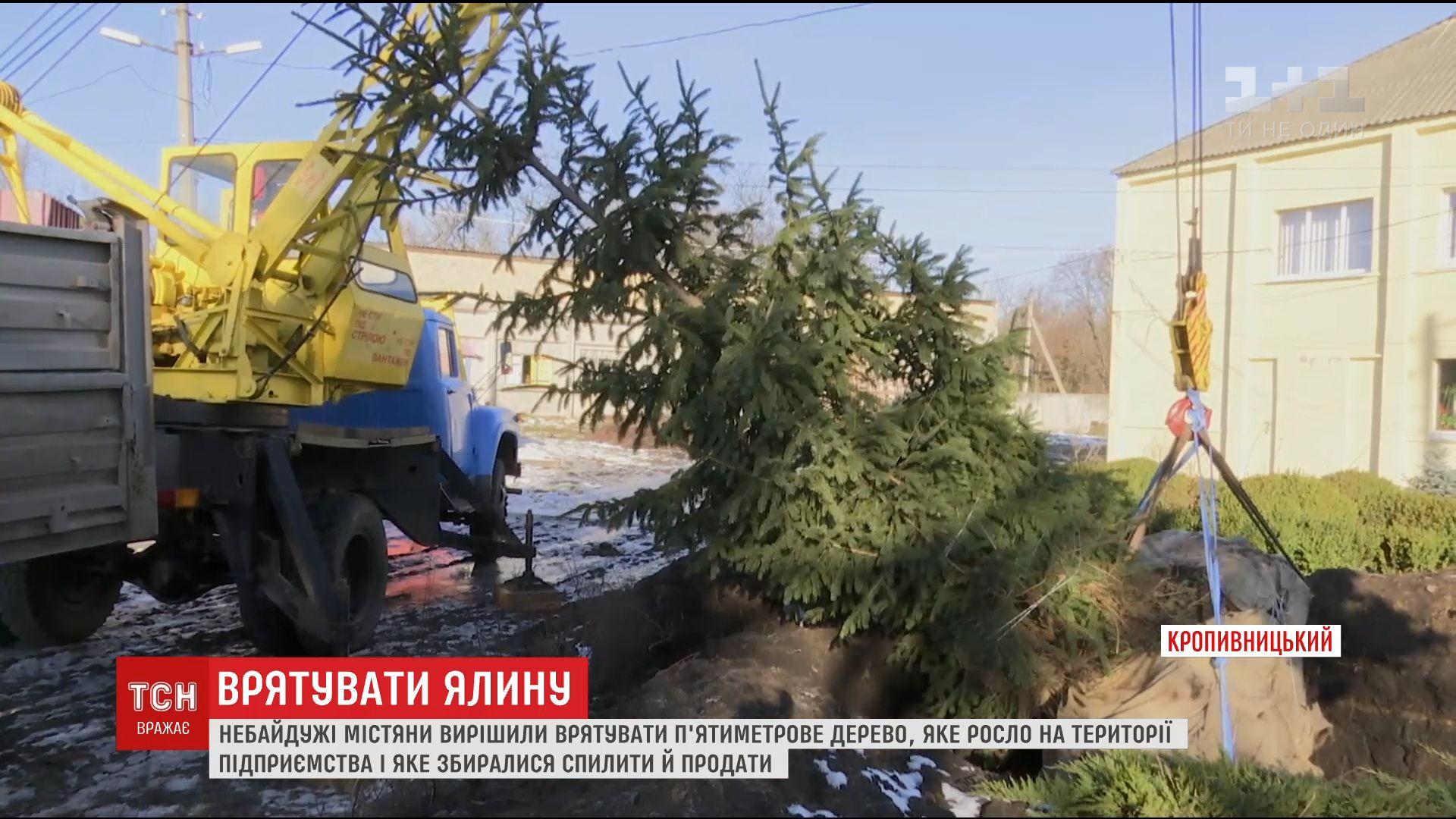 Неравнодушные жители Кропивницкого спасли 5-метровую ель от сруба /