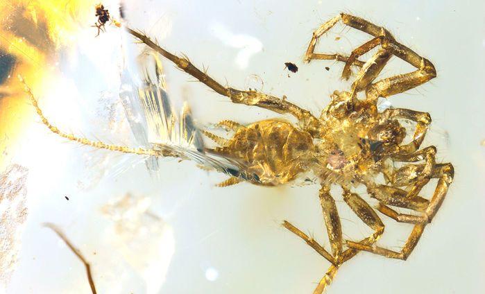 Паука с хвостом обнаружили в янтаре / фото Bo Wang