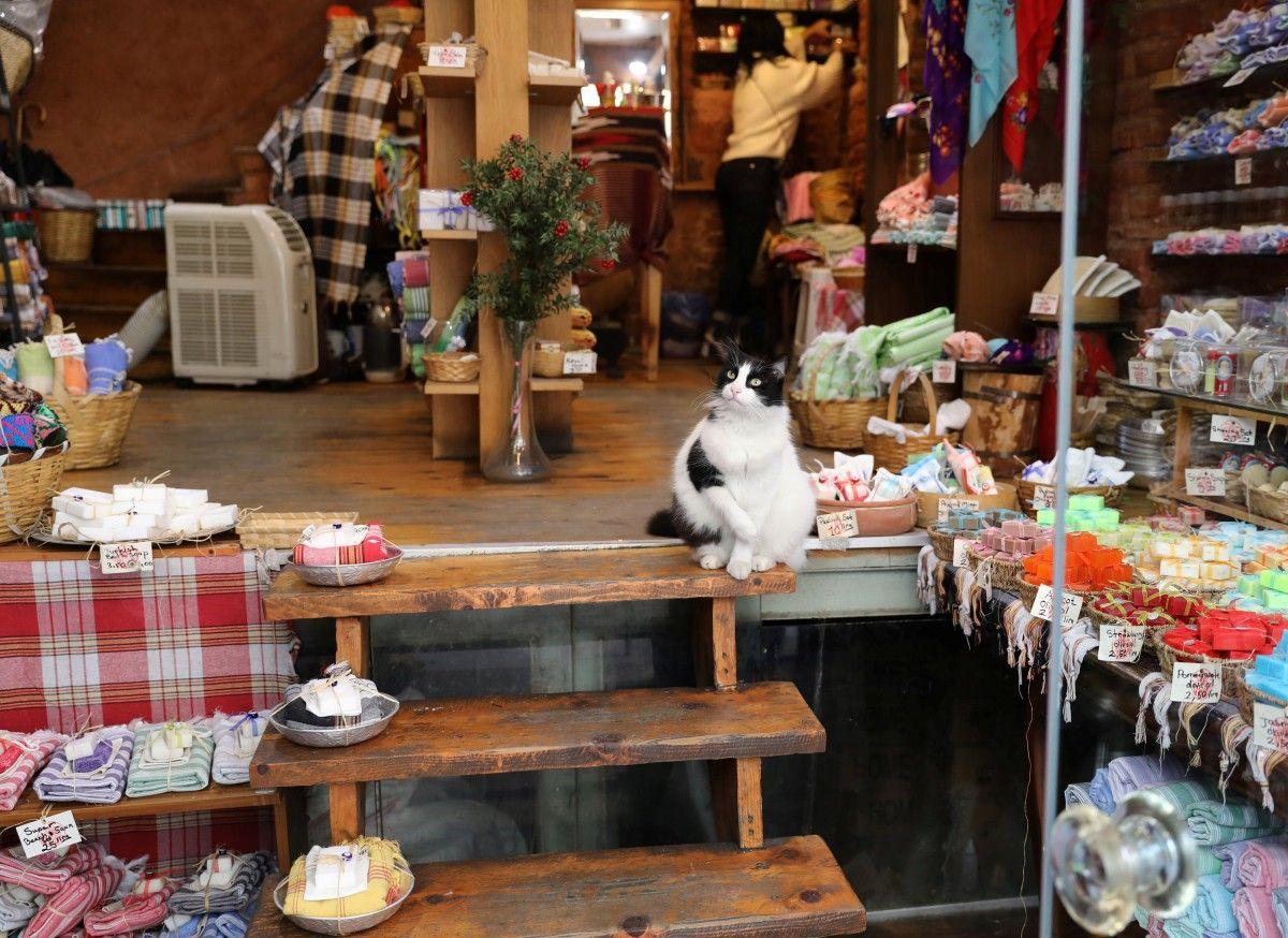 Коты часто заходят в магазины или офисные здания в поисках пищи и их здесь рады видеть / REUTERS/Goran Tomasevic