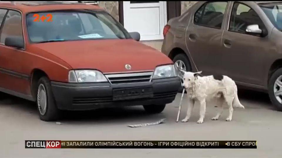 Правда чи брехня? Чотирилапий український диверсант: у Ялті пес відірвав від авто російський реєстраційний номер