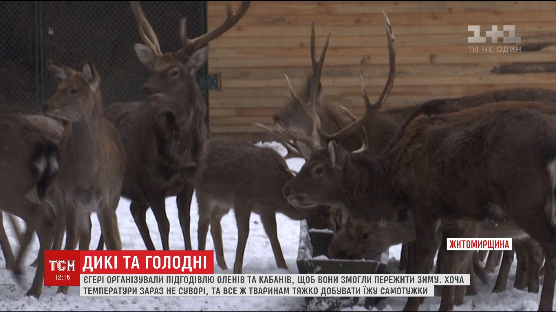 Єгері показали, як доглядають диких тварин узимку / Кадр з відео ТСН