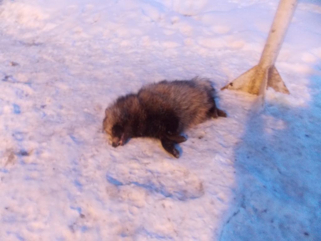 Охотники застрелили животное / фото dpsu.gov.ua