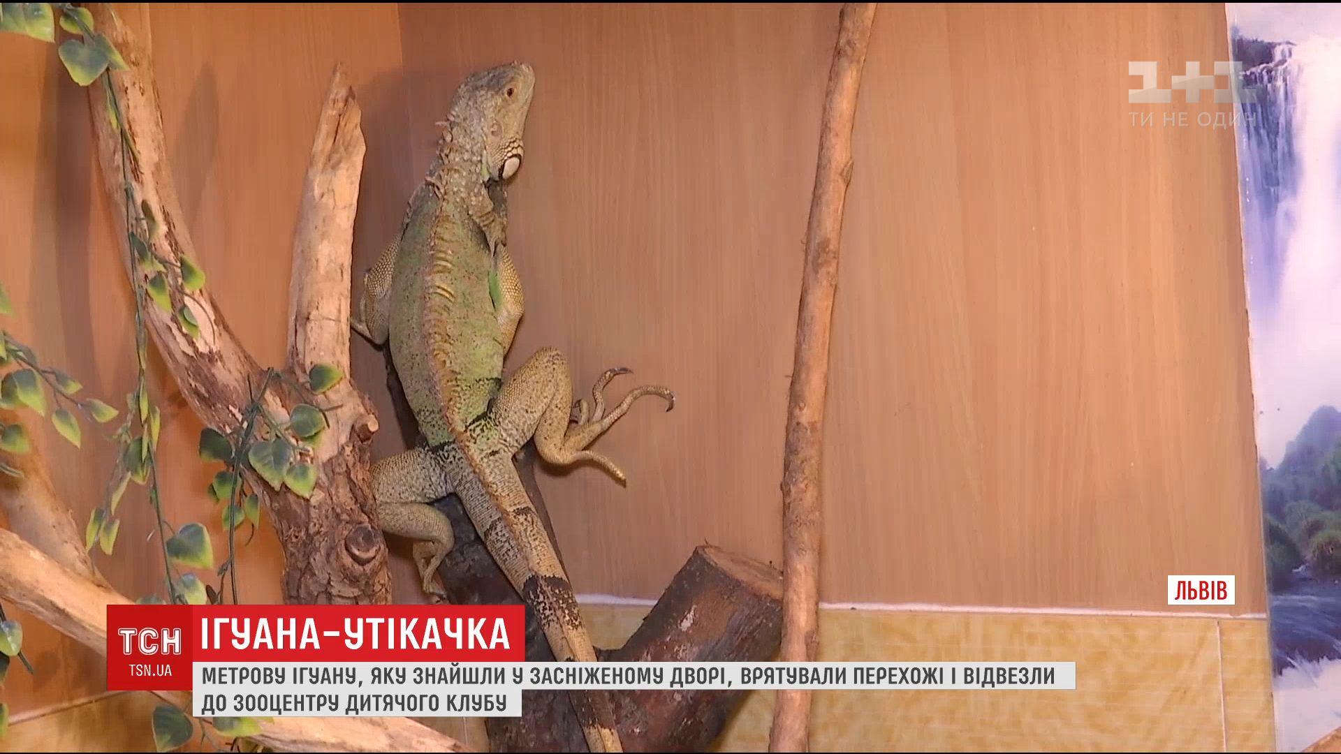 Во Львове возле мусорника нашли метровую ящерицу / скриншот