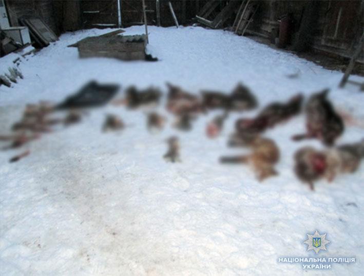 В сарае нашли семь недавно облупленных шкур косули европейской/ фото cn.npu.gov.ua