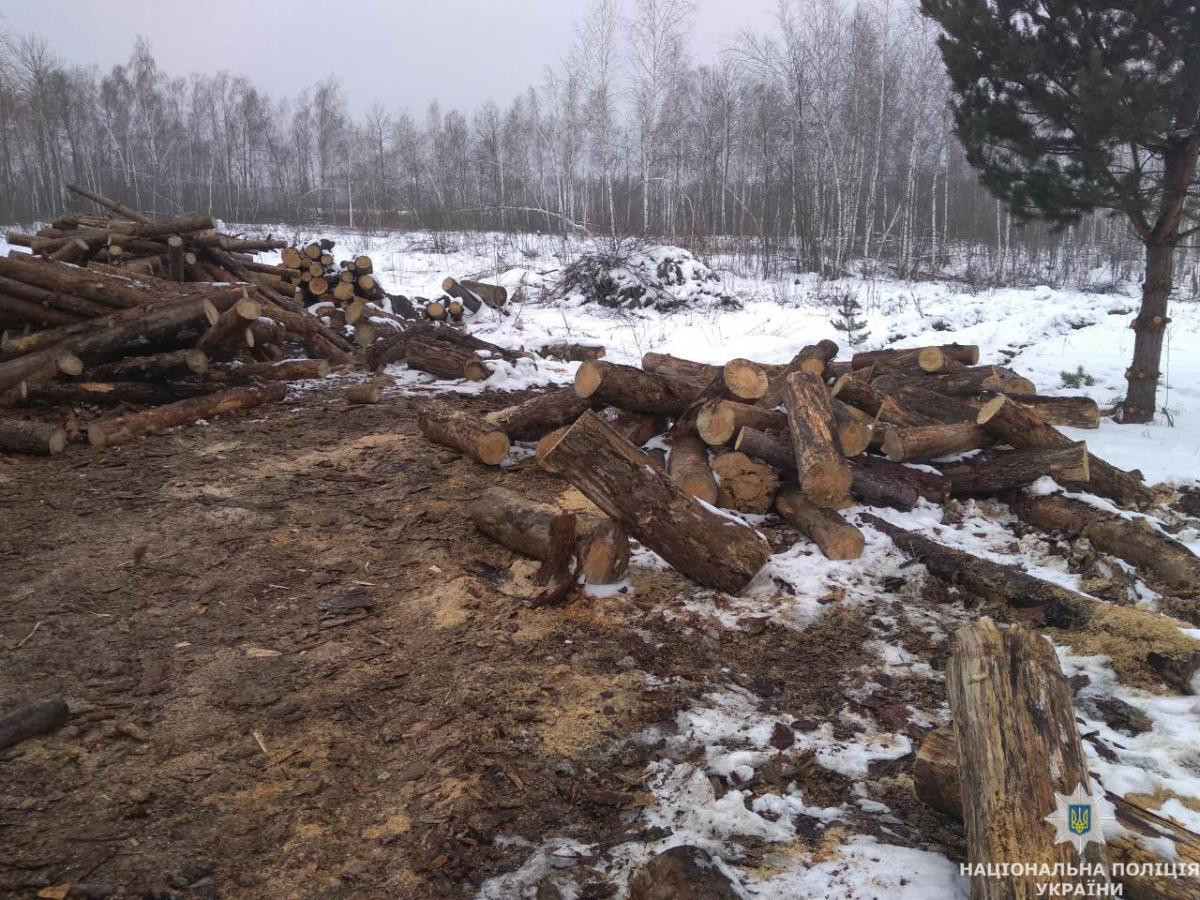 С опушки полиция изъяла готовый древесный уголь, около 45 куб.м. древесины, а также орудия / фото Нацполіція Житомирщины