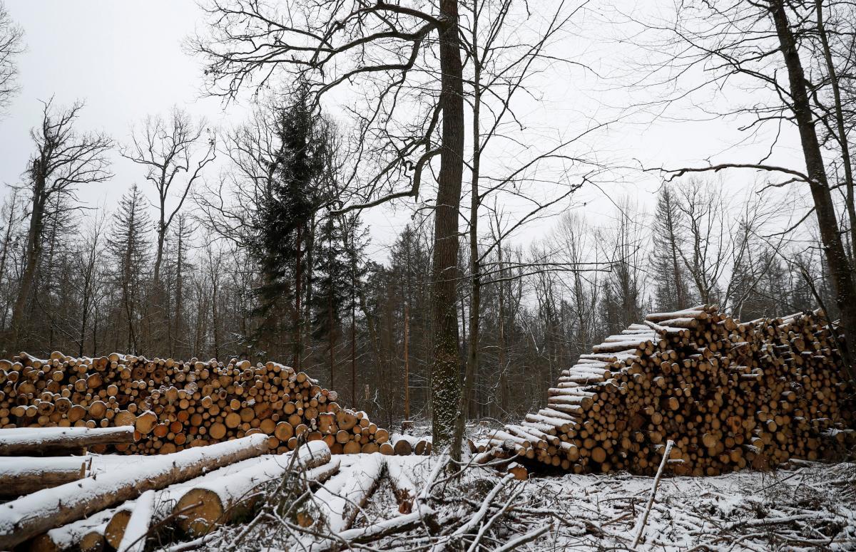 Спор ЕС и Украины по лесу-кругляку / фото REUTERS