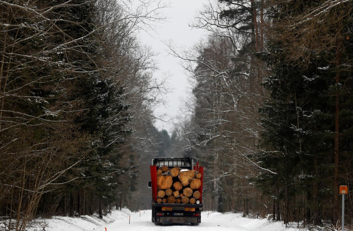 В 2015 году Украина ввела 10-летний запрет на экспорт всей необработанной древесины / фото REUTERS