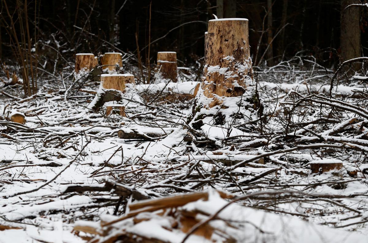 Вирубані дерева / REUTERS