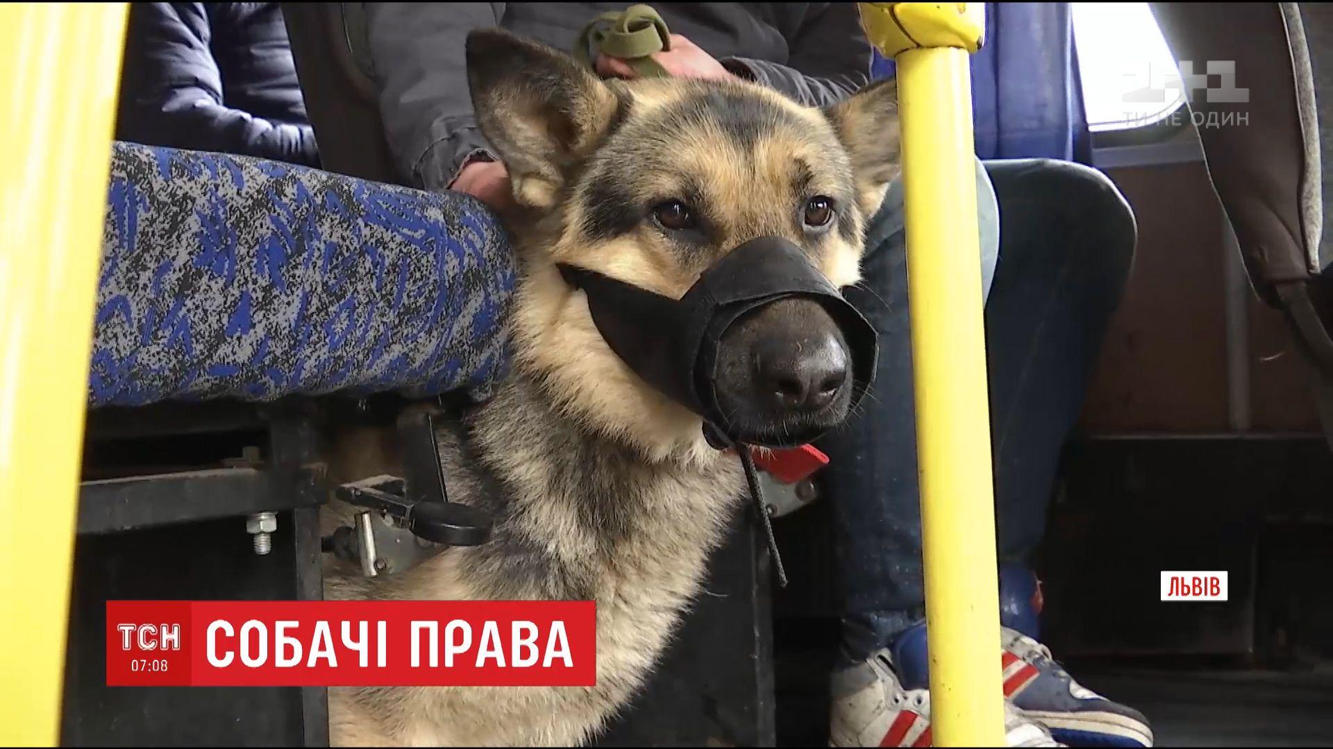 Муж два дня не мог выехать со Львова, потому что его собаке не разрешали зайти в автобус / кадр из видео ТСН