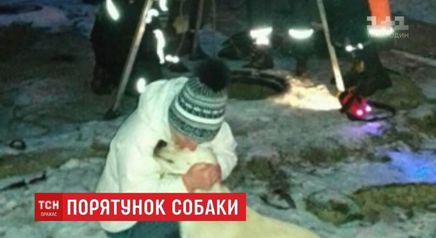 Спасатели в Днепре вытащили из коллектора теплотрассы лабрадора (видео)