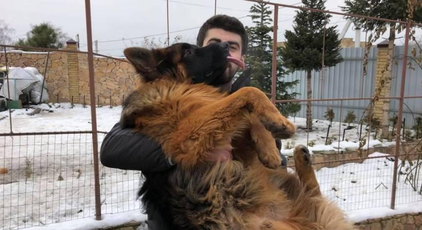 Злоумышленников сгубила жадность: похищенного в новогоднюю ночь пса наконец вернули владельцу (видео)