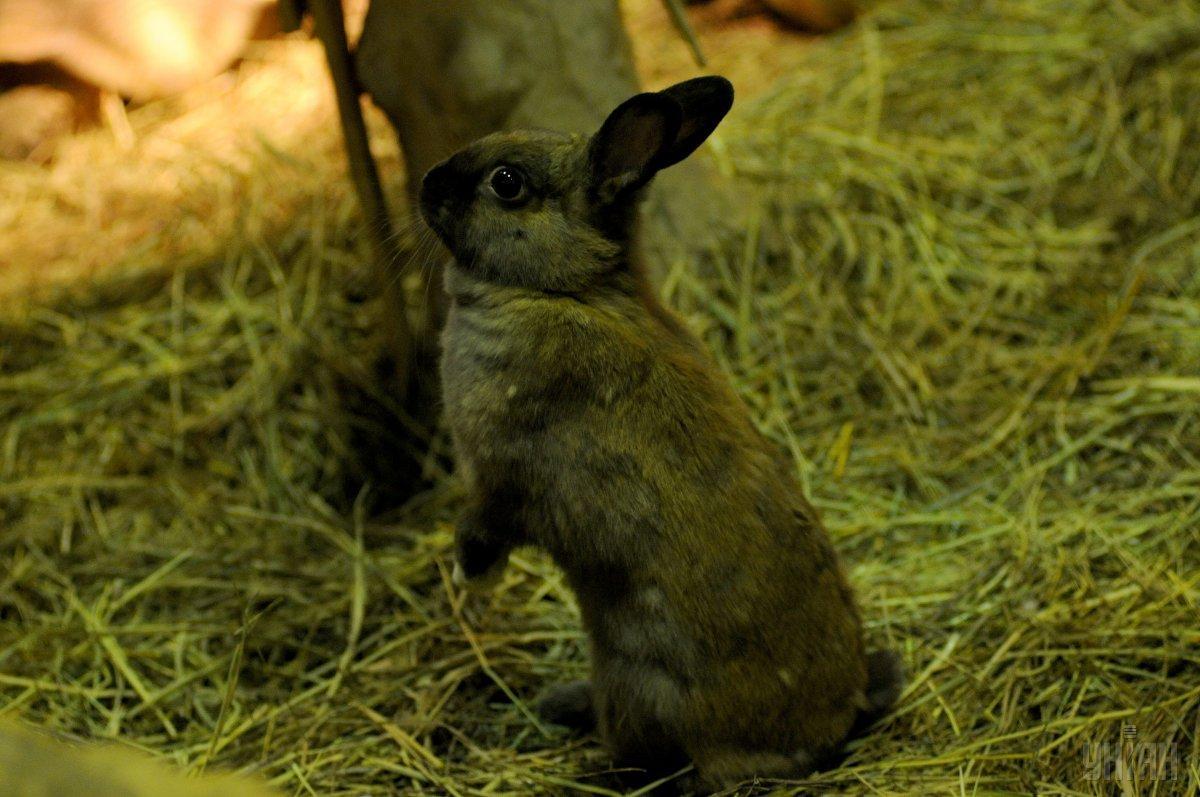 Кролика поймала кошка, а потом сова / фото УНИАН