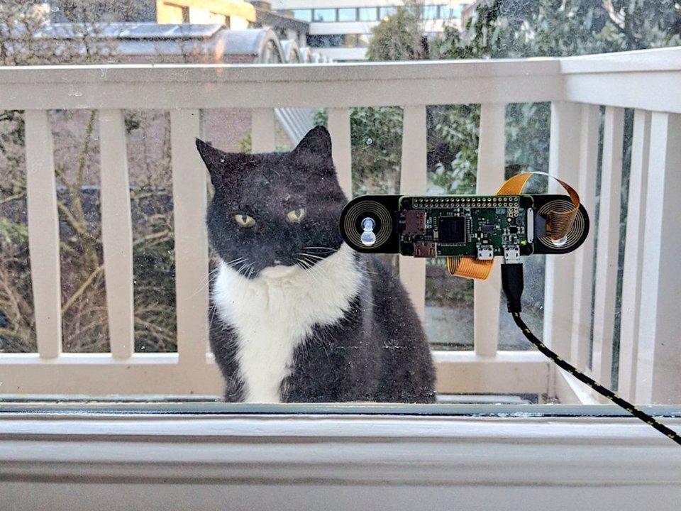 Благодаря устройству коту не приходится долго ждать под дверью / Фото Arkaitz Garro