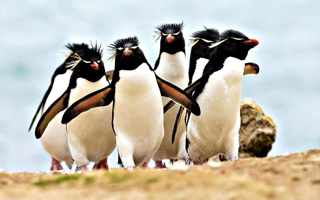 В общей сложности на островах обнаружили более 751 тыс. пар пингвинов / фото mirplaneta.ru