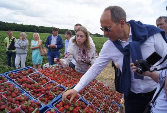 Члени кооперативу «Ягідний край» вирощену полуницю продають компанії «Денон» для наповнювача йогуртів (Фото: «20 хвилин»).