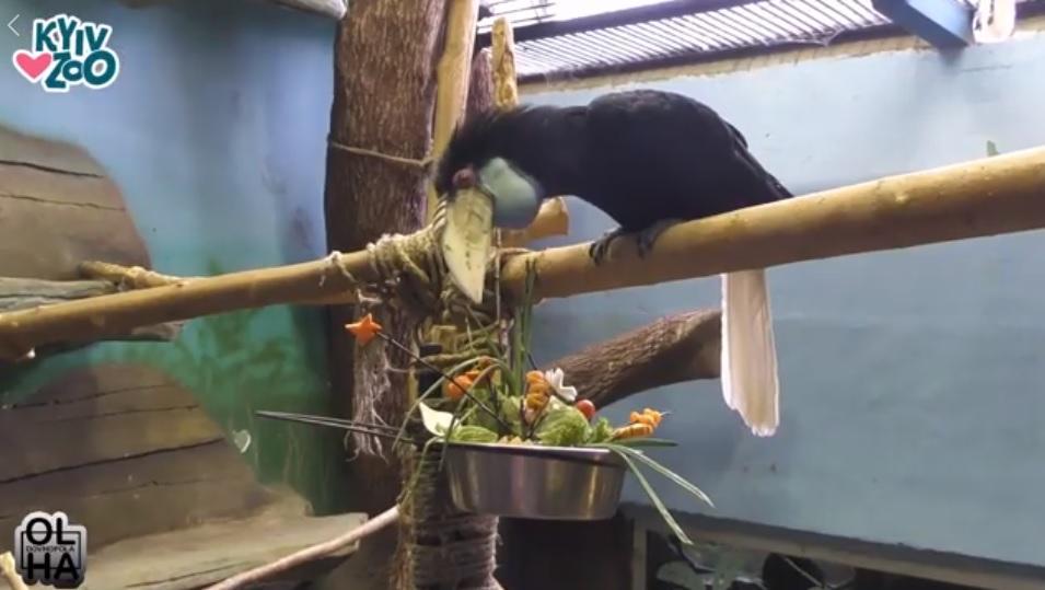 Весеннее настроение в Киевском зоопарке / Фото facebook.com/zoo.kiev.ua