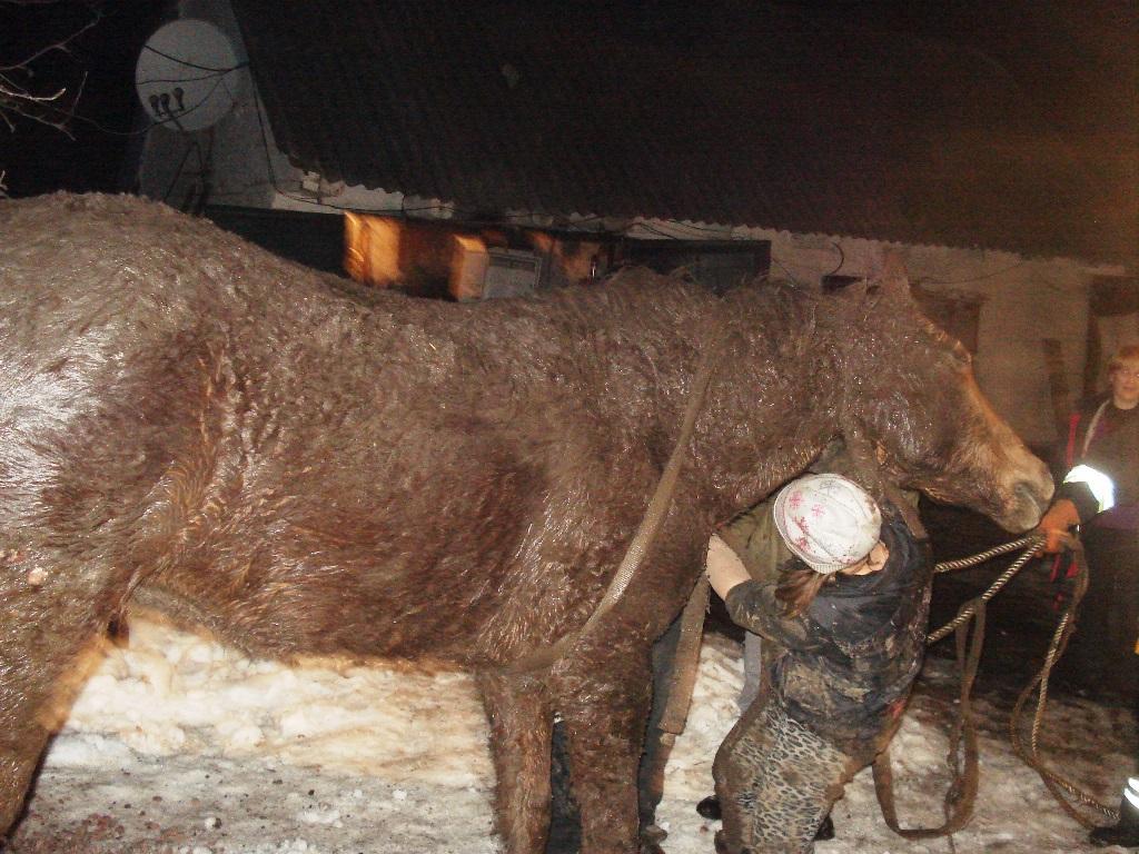 На Житомирщині рятувальники вивільнили з ями коня / фото ДСНС у Житомирській області