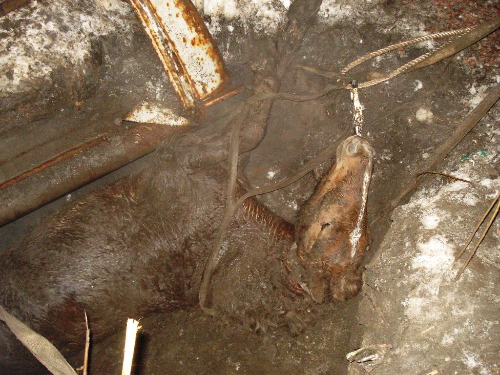 Важких тілесних ушкоджень кобила не отримала / фото ДСНС у Житомирській області