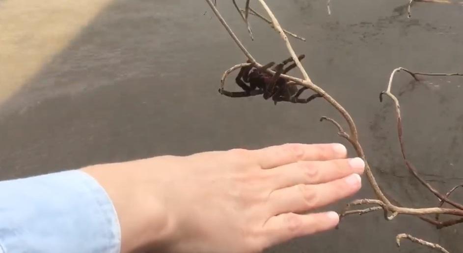 Павука вдалося врятувати / Скріншот