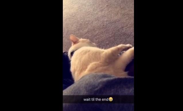 Кіт стомився й впав нерухомо / Скріншот